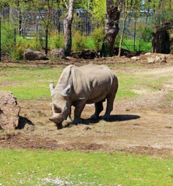 Una giornata dentro il Parco Natura Viva zoo Safari