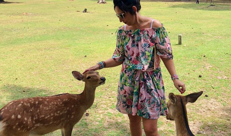 Nara cosa vedere nella città dei cervi